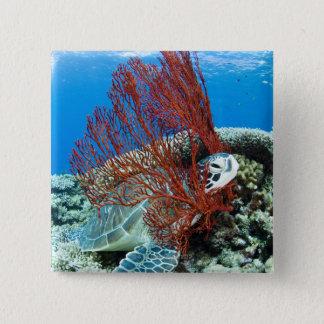 水中に2つを休ませているウミガメ 5.1CM 正方形バッジ