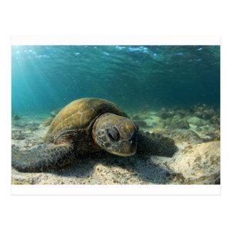 水中ガラパゴスを休ませている緑のウミガメ ポストカード