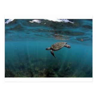 水中ガラパゴス諸島を泳いでいるウミガメ ポストカード