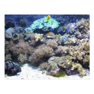 水中写真撮影-多彩な熱帯魚 ポストカード