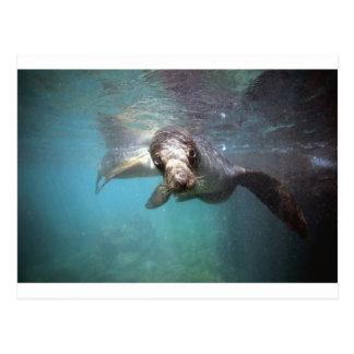 水中好奇心が強いアシカ ポストカード