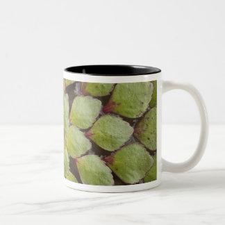 水中植物Rupununi、ガイアナ ツートーンマグカップ