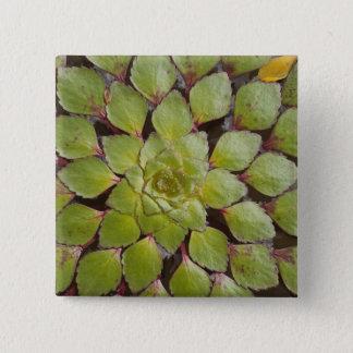 水中植物Rupununi、ガイアナ 5.1cm 正方形バッジ