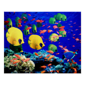 水中海の珊瑚及び熱帯魚 ポスター