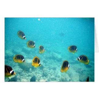 水中熱帯魚 カード