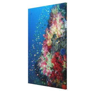 水中珊瑚礁、インドネシア キャンバスプリント