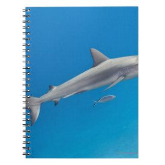 水中生命: メジロザメ属のpereziの水泳 ノートブック