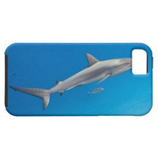 水中生命: メジロザメ属のpereziの水泳 iPhone SE/5/5s ケース