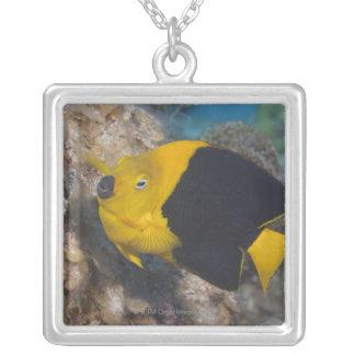 水中生命、魚:  多彩な石美しい シルバープレートネックレス