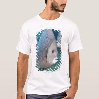 水中生命、魚:  組の灰色のAngelfish Tシャツ
