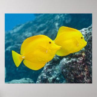 水中生命; 魚: 組の黄色い独特の味 ポスター