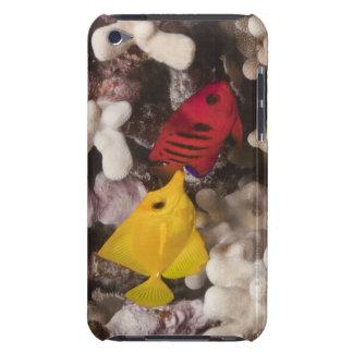 水中生命; 魚: 黄色の独特の味(Zebrasoma Case-Mate iPod Touch ケース