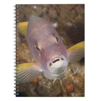 水中生命; 魚:  aのポートレートの上で閉めて下さい ノートブック