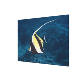 水中生命; 魚: Moorishの偶像(Zanclus キャンバスプリント