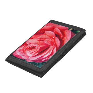 水低下のピンクのバラ、自然の写真
