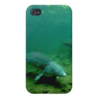 水底の生息物 iPhone 4 COVER