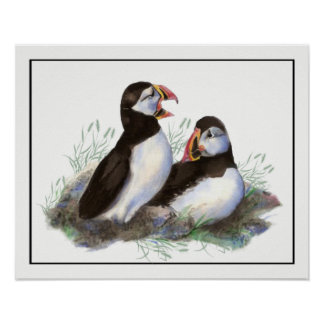 水彩画のツノメドリの海の鳥の芸術 ポスター