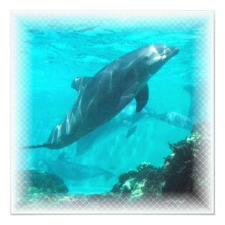 水泳のイルカの招待状 カード