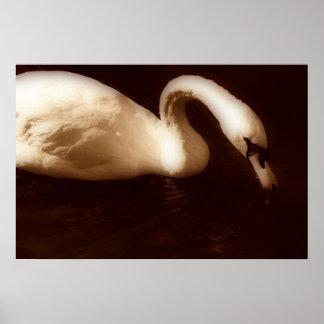 水泳の白鳥 プリント