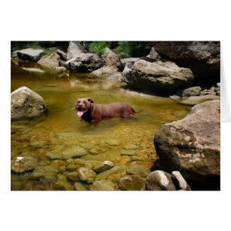 水泳可能な深みのチョコレート実験室ピットの組合せ犬 カード