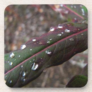 水滴が付いている深緑色のFireweedの葉 コースター