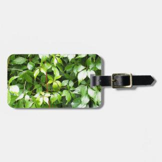 水滴が付いている緑の葉 ラゲッジタグ