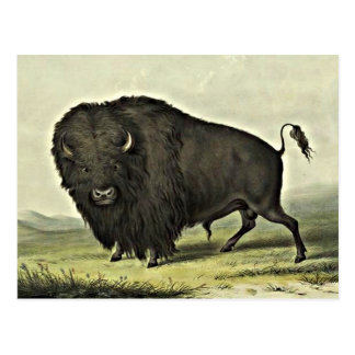 水牛の芸術 ポストカード
