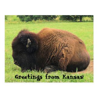 水牛、カンザスからの挨拶! ポストカード