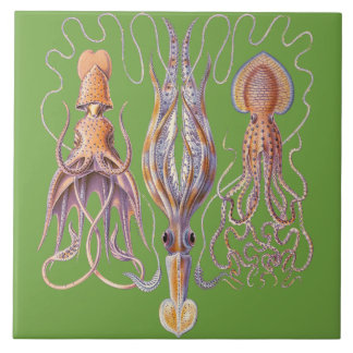 水生生命Haeckelのタコの製陶術 タイル