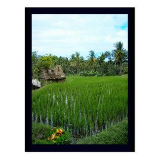 水田、Ubudバリ島、インドネシア ポストカード