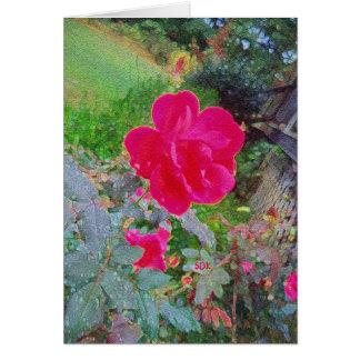 水露が付いている開花の赤紫のピンクのバラの花 カード
