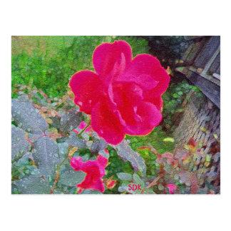 水露が付いている開花の赤紫のピンクのバラの花 ポストカード