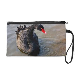 水、動物の写真の黒鳥の水泳 リストレット