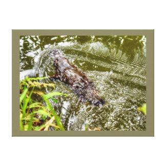 水EUNGELLAオーストラリアのPLATYPUS キャンバスプリント