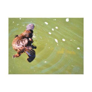 水EUNGELLA国立公園オーストラリアのPLATYPUS キャンバスプリント