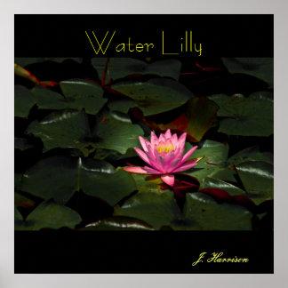 水Lilly ポスター
