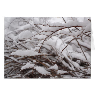 氷った枝 カード