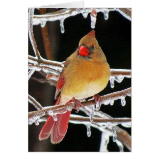 氷のプリンセス-メスの基本的な鳥 グリーティングカード