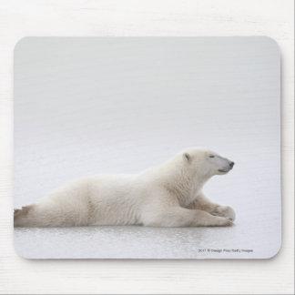氷の湖に置いている白くま マウスパッド