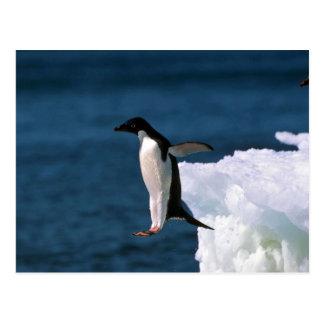 氷山から跳躍しているアデリーペンギン ポストカード