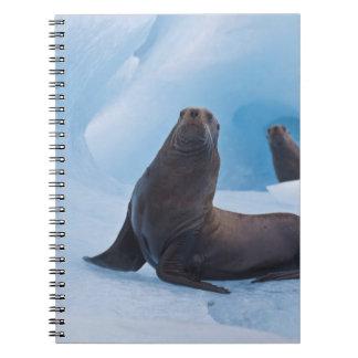 氷山のよくはしゃぐな星のアシカの格闘 ノートブック