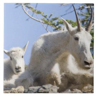 氷河国民の子供を持つマウンテンゴートの乳母 タイル