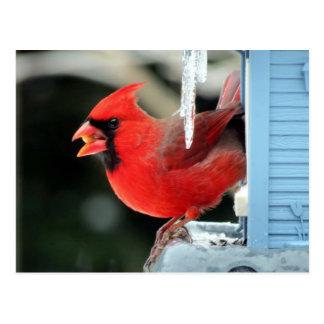 氷-鳥の(鳥)ショウジョウコウカンチョウ ポストカード