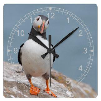 永続的なツノメドリ スクエア壁時計