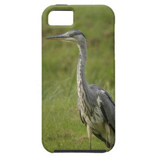 池による灰色の鷲 iPhone SE/5/5s ケース