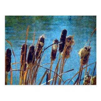 池のネコヤナギ ポストカード