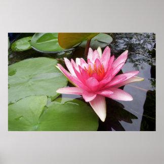池のピンクのLilly ポスター
