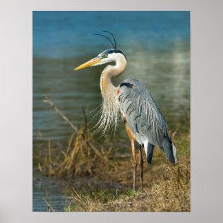 池のプリントの素晴らしい青鷲 ポスター