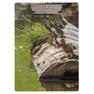 池の彼ら自身を日に晒している色彩の鮮やかなカメ クリップボード