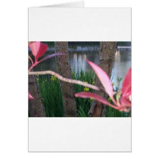 池の植物相 カード